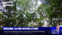 Ils replantent des arbres en Amazonie dans le but de faire revivre la forêt