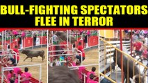 Bull-fighting spectators flee in terror as bull jumps into stands, video viral | Oneindia News