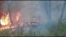 Fier/ Zjarri përfshin 5 ha zonë pyjore, zjarrfikësit në vendngjarje, vënë nën kontroll flakët