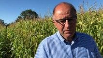 Saint-Michel-Chef-Chef. Un test grandeur nature dans un champ de maïs