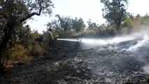Kemalpaşa'da orman yangını - İZMİR