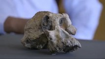 Skull Of Ancient Human Ancestor Unearthed