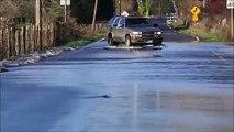 Ces saumons traversent une route inondée en nageant sur le goudron !