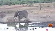 Un éléphant sans pitié charge un rhinocéros et son bébé