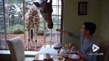 Dans ce restaurant vous partagez votre déjeuner avec des Girafes