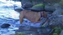 Ce chien est un bien meilleur pêcheur que son maitre...