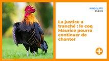 La justice a tranché : le coq Maurice pourra continuer de chanter