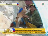 Hero dog saves man from fire in Palawan
