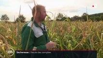 Sécheresse : lourd bilan pour les éleveurs français