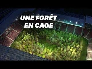 La Plus Vieille Forêt Du Monde Nest Pas Là Où Vous Limaginez