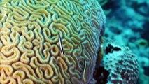 Bahamas Pure Nature. 3/5. Récifs coralliens