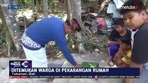 Indonésie: Les habitants d'un village de Bali ont découvert un serpent à deux têtes, très rare à l'état sauvage - VIDEO