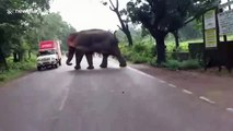 Driver escapes injury after elephant topples over van in eastern India