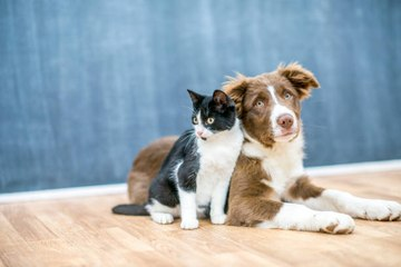 ¿Qué hacer para que el perro y el gato se lleven bien?