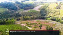 Belgique : la sécheresse décime la forêt