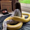 Cette petite fille joue avec son énorme serpent. Pas peureuse