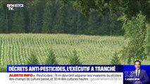 Pesticides: entre 5 et 10 mètres minimum devront séparer les maisons ou les écoles des champs