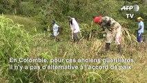 En Colombie, d'ex-rebelles FARC défendent le processus de paix