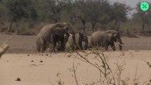 Se prohíbe la venta de elefantes a zoológicos
