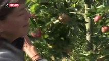 Les agriculteurs bio se dressent contre le prosulfocarbe