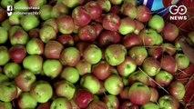 J&K: Communication Blockade Affecting Apple Trade
