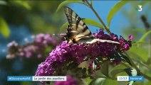 Alpes-de-Haute-Provence : un jardin dédié aux papillons
