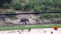 Ce pauvre bébé éléphant va se prendre une belle gamelle