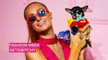 Of course Paris Hilton dressed her dog as Wonder Woman for NYFW