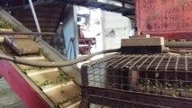Le houblon est trié et acheminé au séchage