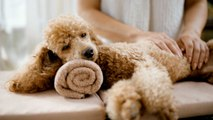 7 Luxurious Dog-Friendly Hotels