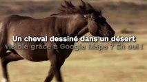 Un cheval dessiné dans un désert visible grâce à Google Maps ? Eh oui !