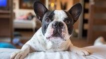 ¿Qué lesiones puede sufrir un perro en la piel?
