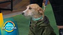¡Conoce a estos bellos influencers caninos! ¡Te enamorarán! | Venga La Alegría