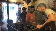 Vendanges des dernières vignes de Saint-Gilles-Croix-de-Vie