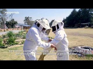 Salvar a las abejas