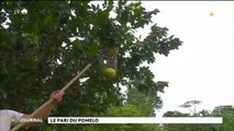 Au cœur du fenua : les pomelos d'Hitiaa O Tera