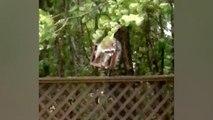 Waschbär im Wind: Vierbeiner klammert sich während Hurrikans an Vogelhäuschen fest