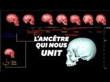 Le crane virtuel de l'ancêtre commun d'Homo sapiens ressemblerait à ça