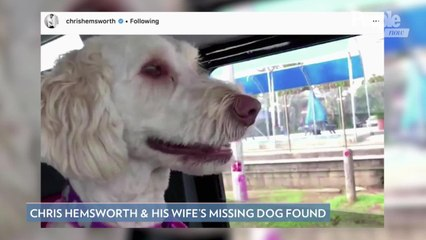 Chris Hemsworth and Elsa Pataky's Dog Sunny Found After Running Off and Going Missing in Australia
