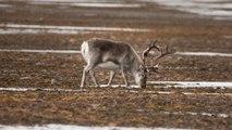A Longyearbyen, aux avant postes du réchauffement climatique