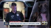 Mesa officer retires after investigation into K-9's death