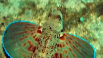 Remarkable Fish Walks in Water