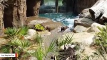 These Giant River Otters Are Expert At Using The Slide