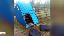 Bear Cub Dies After Dumpster Topples