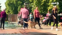 German hounds get exclusive access to a public pool for a day, and love it