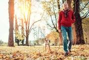 Bien réussir la promenade de votre chien
