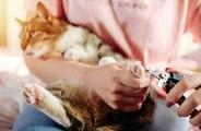 S'occuper des griffes de son chat