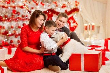 Offrir un animal pour Noël : bonne ou mauvaise idée ?
