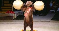 Un spectacle d'ours organisé dans une ville des Hauts-de-France provoque la colère et l'indignation
