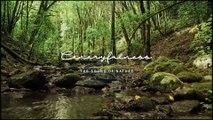 Siete melodías para practicar mindfulness inspiradas en los sonidos de la naturaleza canaria